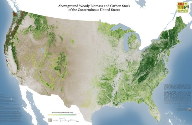 Aboveground woody biomass and carbon stock, USA map