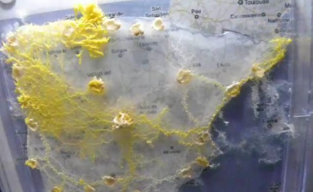 Using Slime Mold To Engineer Transport Networksmaptd - Slime mold map of us