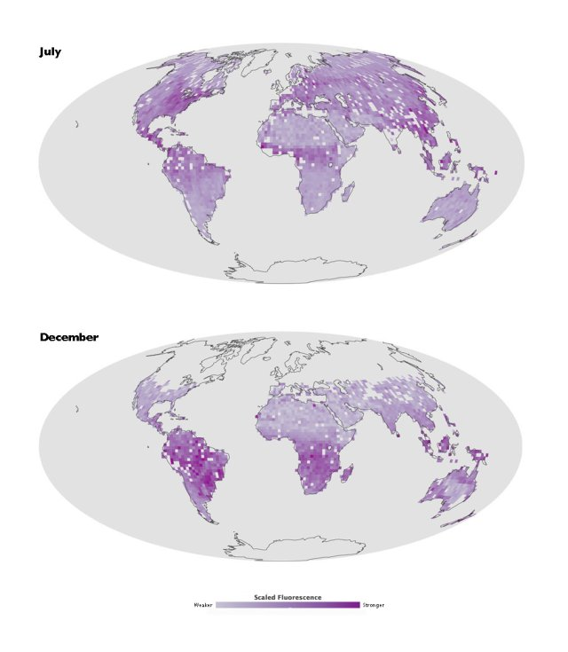 Global plant fluorescence  July vs December